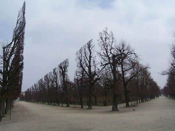 trees-photoshop