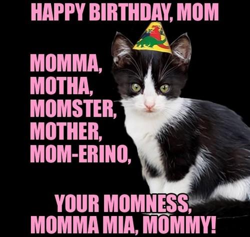 birthday_cat_happy_birthday_mom_meme2