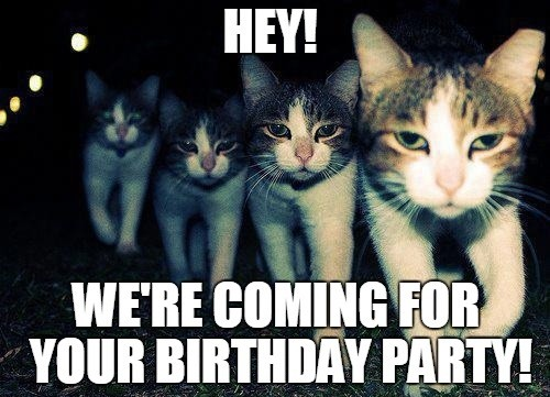 cats_birthday_memes_for_friend1-1