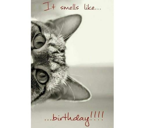hiding_cat_birthday_memes_for_friend1-1