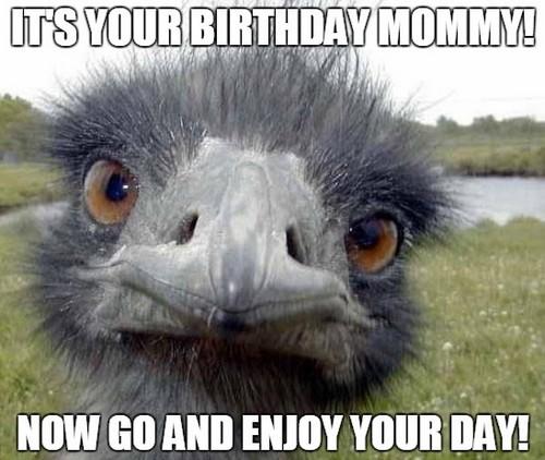 ostrich_happy_birthday_mom_meme1
