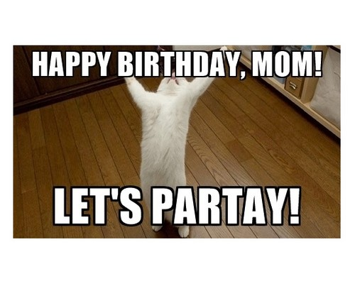 praise_cat_happy_birthday_mom_meme1