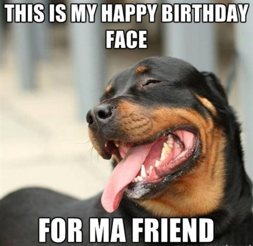 rottweiler_birthday_memes_for_friend1-1