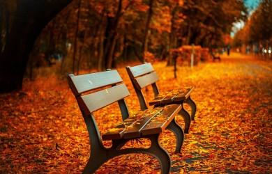 first-fall-of-season