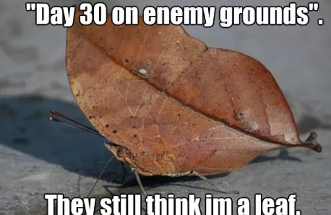 funny-first-day-of-fall-image