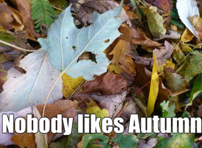 i-hate-autumn-meme