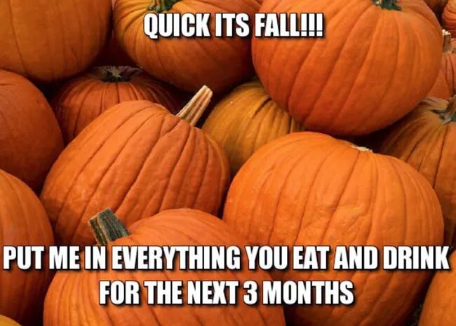 pumpkin-funny-fall-season-meme