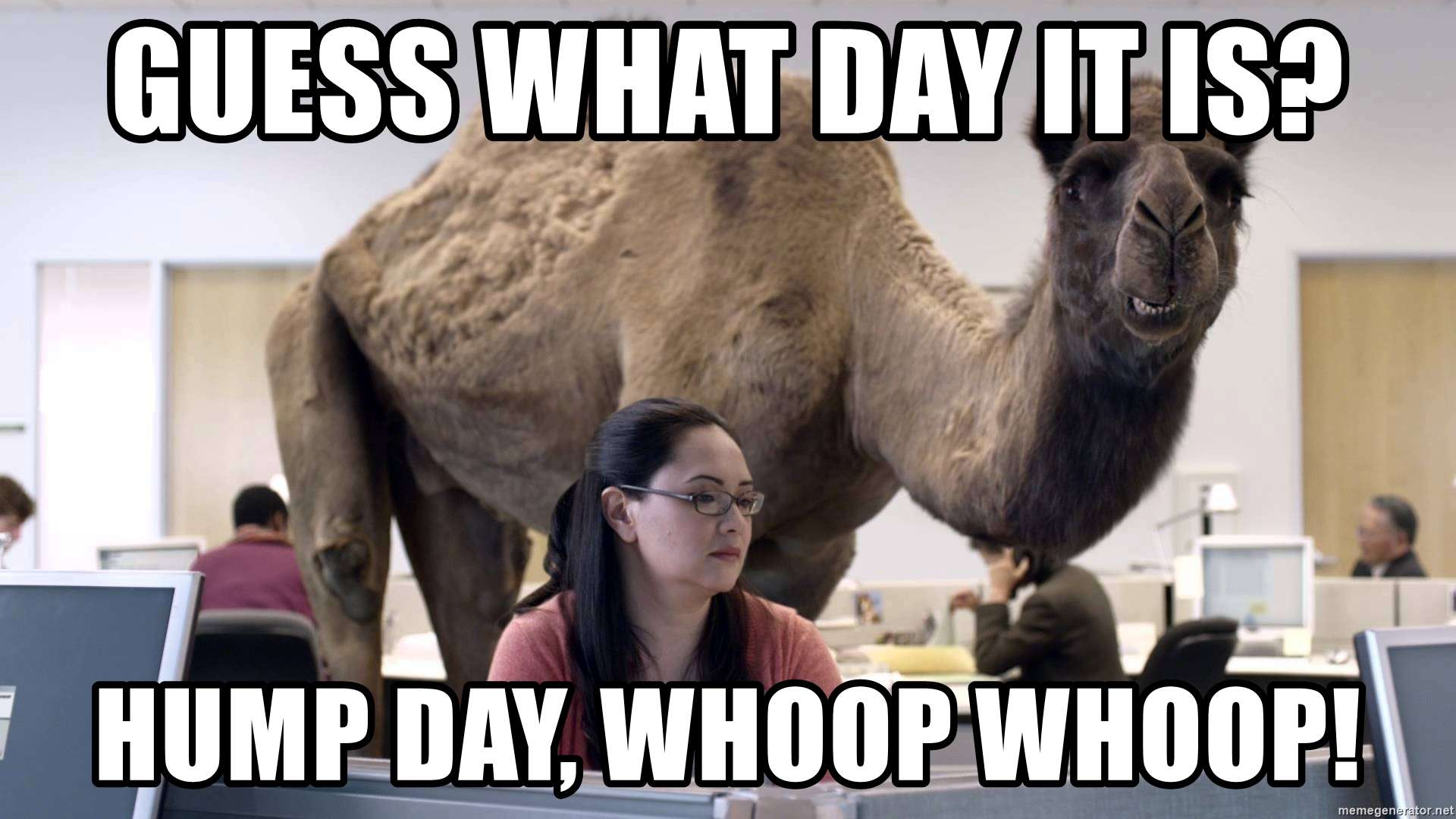 hump-day-camel-meme