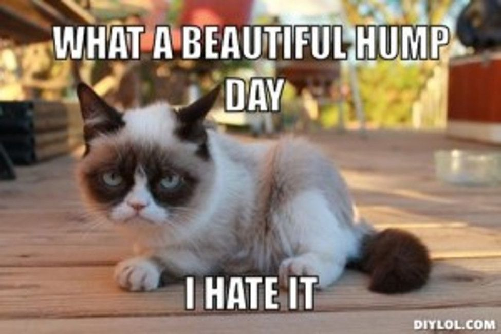 hump-day-meme