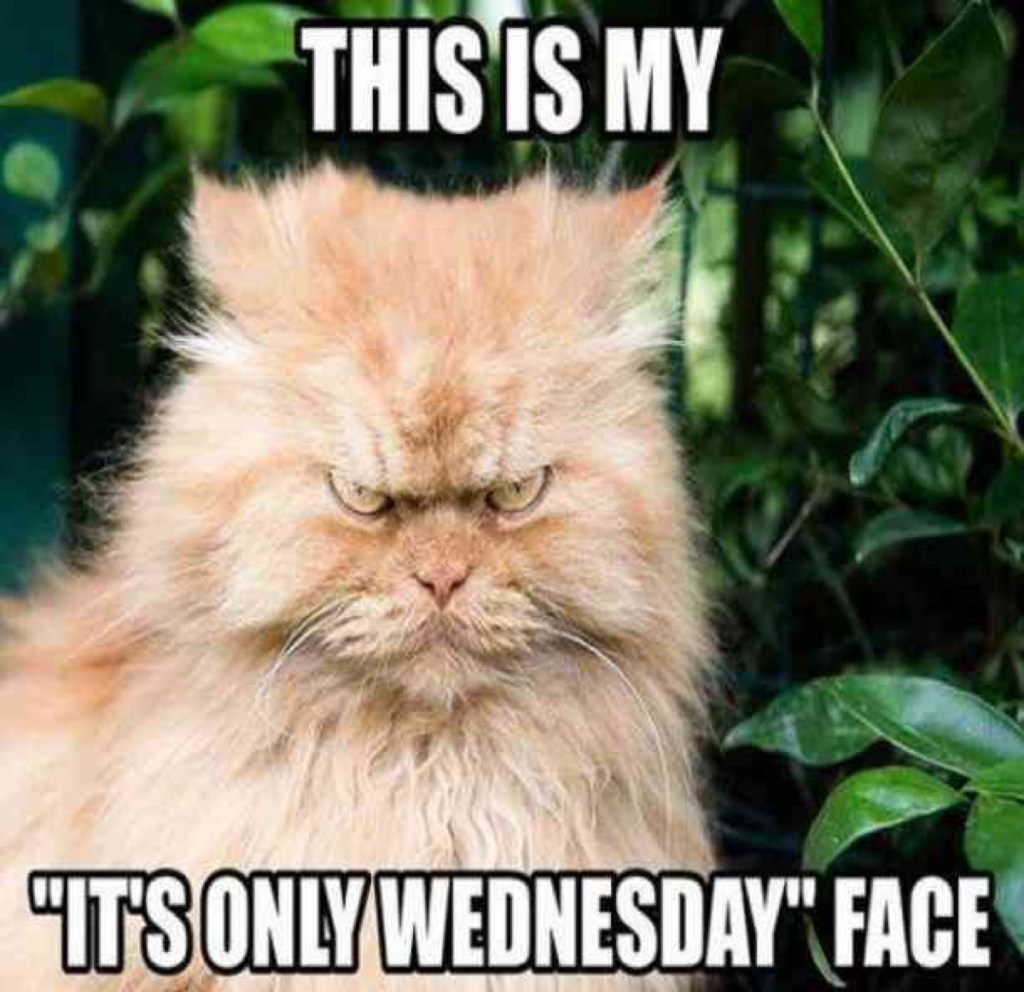 wednesday-cat-hump-day